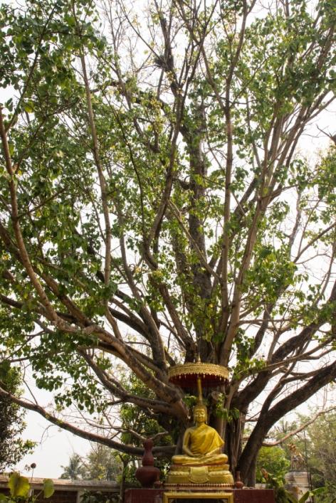Buddha Statue Tree