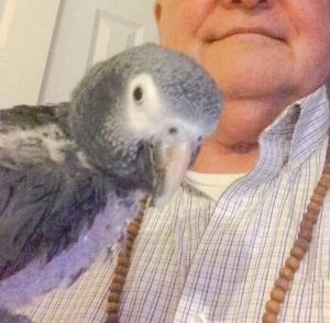 Mel Pine's Parrot Maxine
