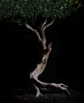 Bonsai Tree. Light decoration. Zen Art