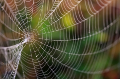 Spider-web-000019677014_Medium