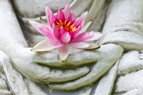 Buddha hands holding flower, close up